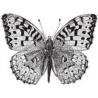 tmsoe_butterfly_square.jpg