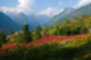 Shimla-Red-carpet-awaits-Kawar-Rohru.jpg