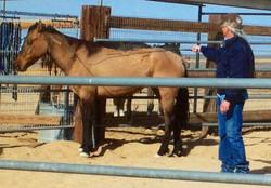 Darice & Adobe-Carter Res wild horse