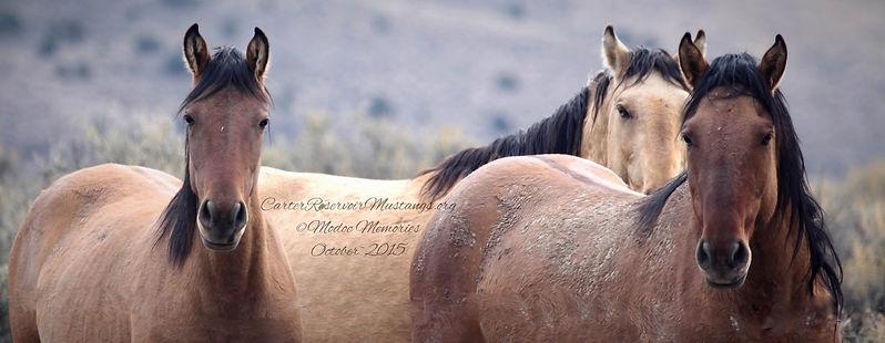 primitive dun wild horses carter reservoir mustangs wild horses