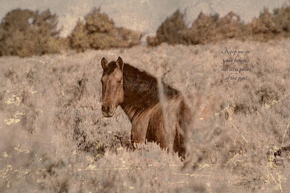 Carter Reservoir Wild Horse, Mustang, Carter Mustang