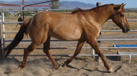 3 yr old Red Ryder, Carter Reservoir mustang stallion