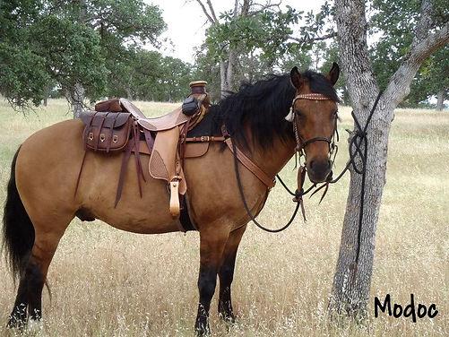 adopted branded carter reservoir wild horse, mustang