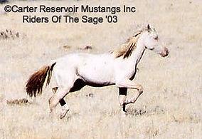 unusual Carter wild mustang