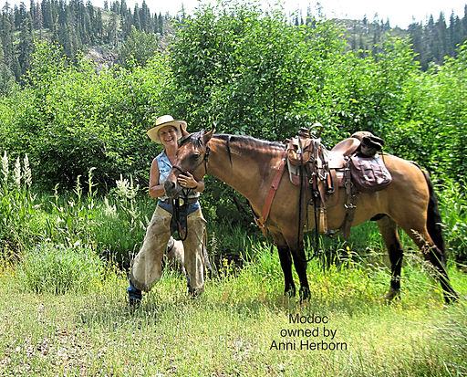 branded carter reservoir mustang, branded wild horse, blm carter