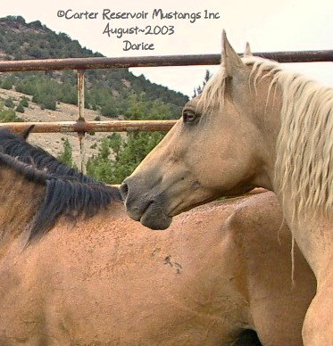 A golden-eyed palomino stallion from 2003.