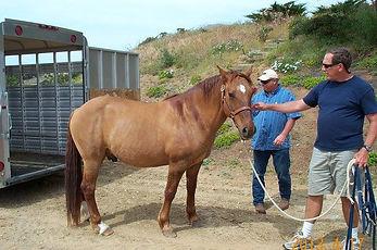 Manzanita showing his shoulder stripes