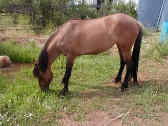11 Yr Carter Reservoir Mustang Needs A New Home