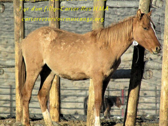 Litchfield Ca. BLM Corrals Offering Wild Horses For Adoption