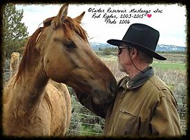 Carter Wild Horse Stallion, mustangs, Carter Res HMA, wild horse