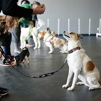 dog-obedience-training-denver-1.png