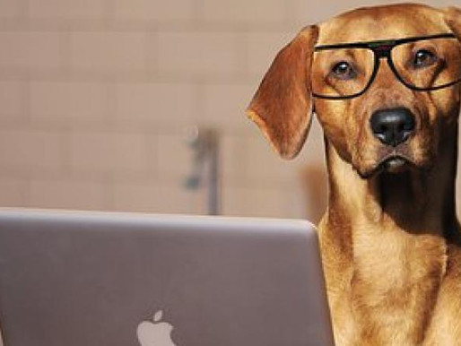Benefits of Lifelong Learning for Dogs