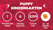 puppy-kindergarten-icon.png