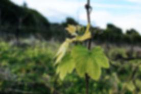 Wineard Leafguest house.jpg