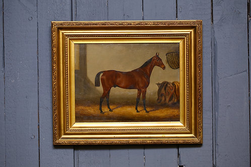 C19th Oil on board depicting thoroughbred stallion