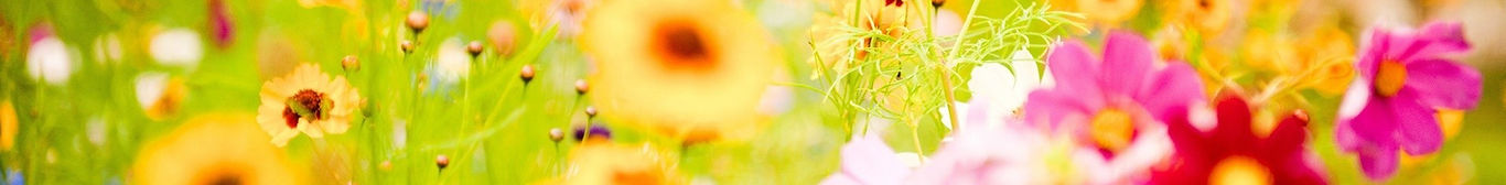 flowers-plants-images-and-wallpapers-30.