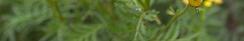 imageonline-co-split-image.png