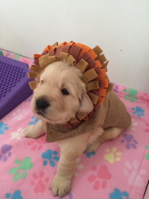 puppy & Turkey 2016