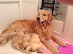 Diva and Puppies