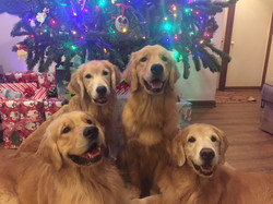 Christmas 2017 Dogs