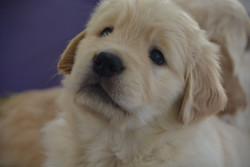 puppy head 2016