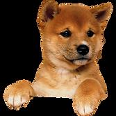cute-puppy-climbing.png