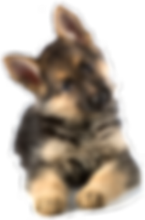gsd-puppies-background.png