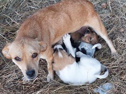 Mum and pups awaiting food....