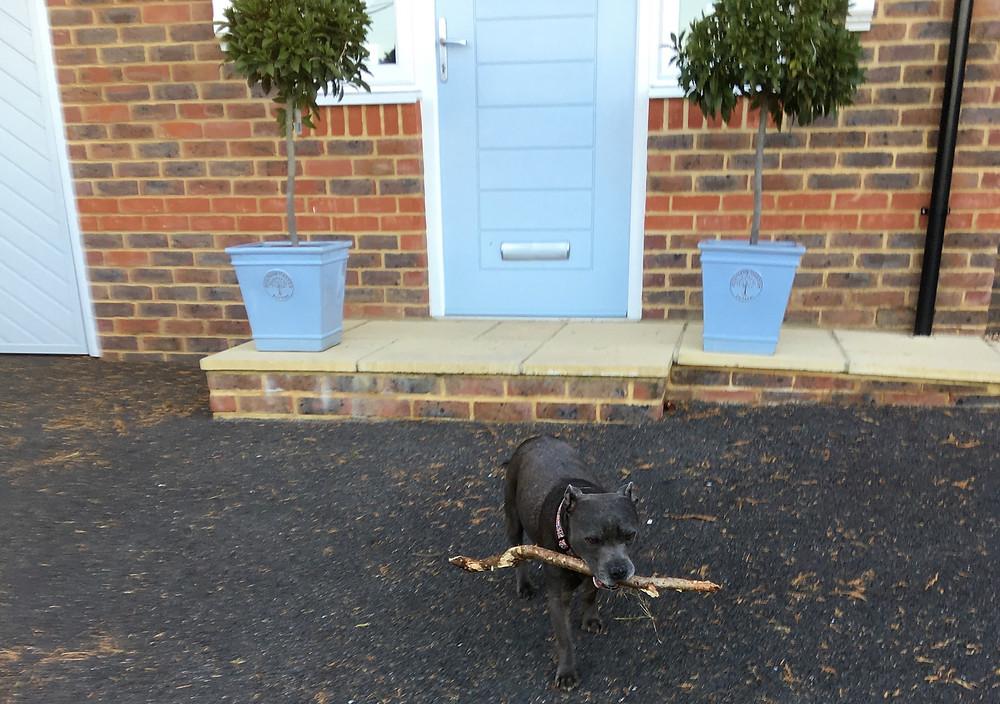 Jake rescuing 'stick'