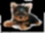 bottom_dog.png