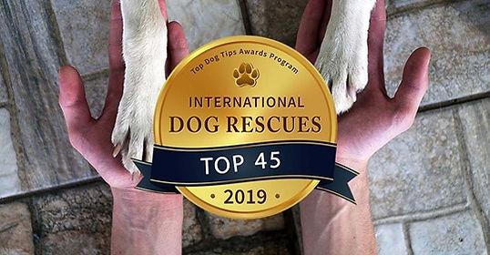 Top dog rescues.jpg