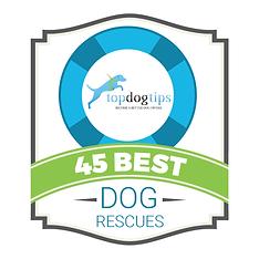 2021 Top Dog Tips Award.png