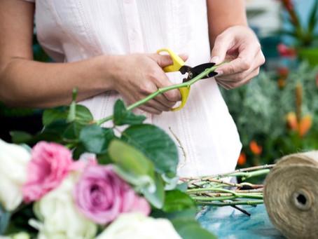 7 dicas para cuidar das flores em casa