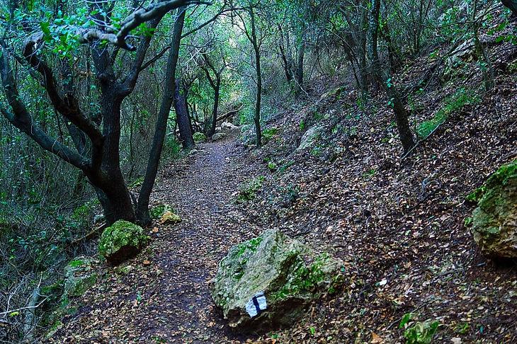 תמונה: הר הכרמל - ההר הירוק כל ימות השנה - טיול מזמר בעקבות יורם טהרלב  |  מאתר: ארץ עיר טיולים |  יום כיף | ODT | טיולים בצפון | הפקת אירועים