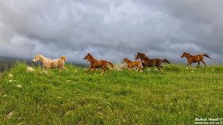 תמונה: סוסי הפרא של הגולן ן |  מאתר: ארץ עיר טיולים |  יום כיף | ODT | טיולים בצפון | הפקת אירועים