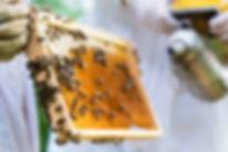 תמונה: סיור במכוורת דבש     מאתר: ארץ עיר טיולים    יום כיף   ODT   טיולים בצפון   הפקת אירועים