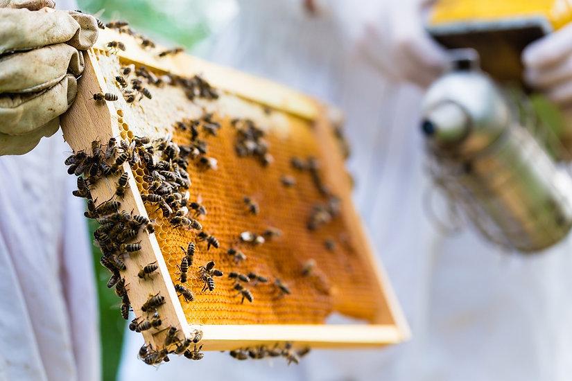 תמונה: סיור במכוורת דבש  |  מאתר: ארץ עיר טיולים |  יום כיף | ODT | טיולים בצפון | הפקת אירועים