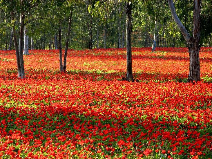 תמונה: יער שוקדה - דרום אדום  |  מאתר: ארץ עיר טיולים |  יום כיף | ODT | טיולים בדרום  | הפקת אירועים