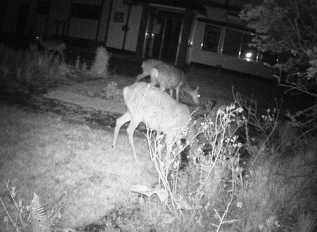 鹿との闘い2 Battle with deer 2