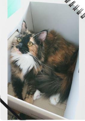 【もなか】 #箱猫ノート