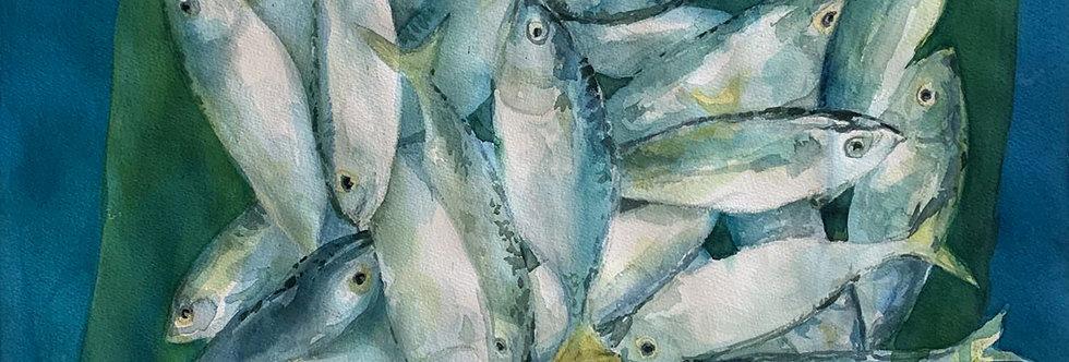 Fresh Fish Alumahan