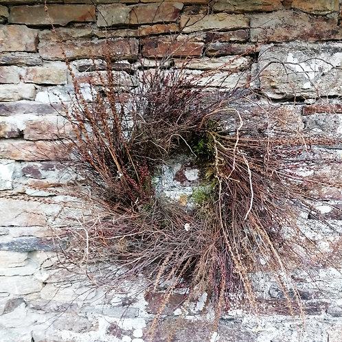 The Thicket - Seasonal Wreath