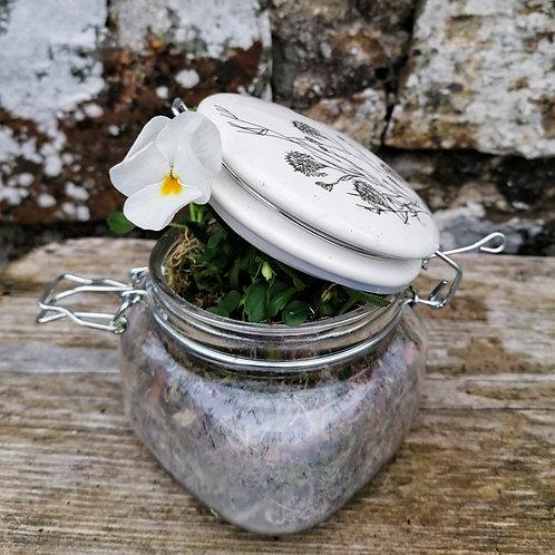 White Viola In A Weck Jar