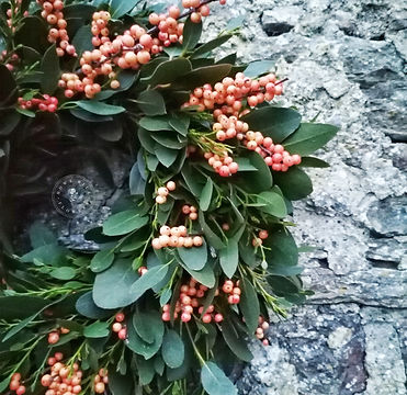 Eucalyptus & Berry Wreath HHFF