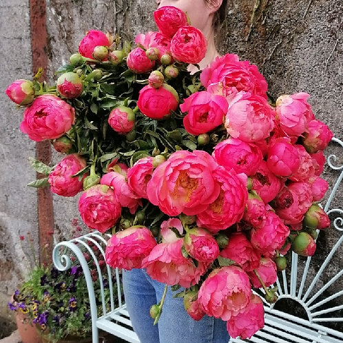 Dreamy Peony Bunch - CLICK & COLLECT ONLY
