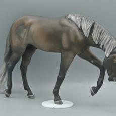 YooHoo, Rocky Mountain Horse