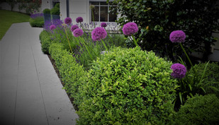 ox Balls and Alliums