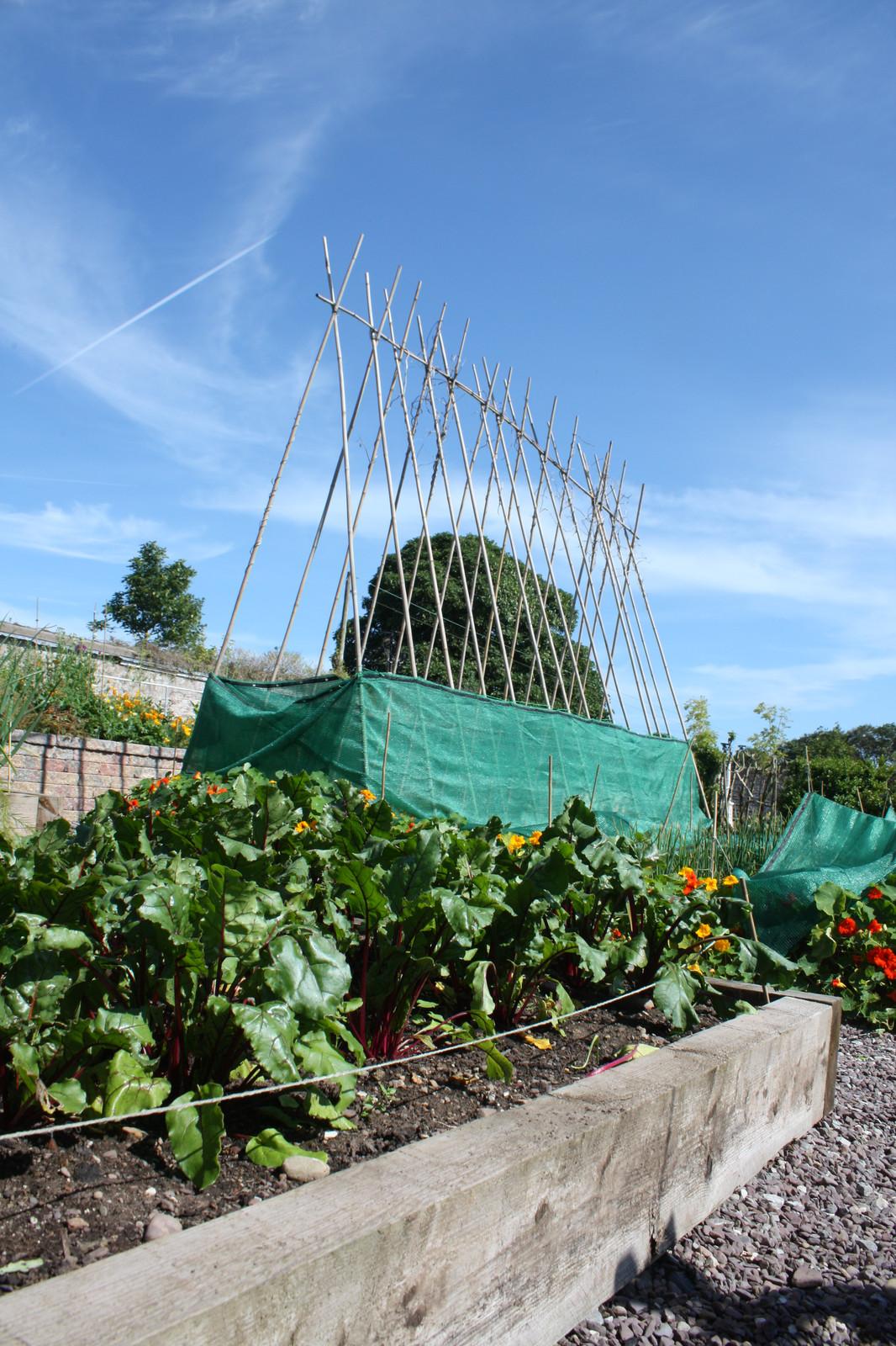 Garden Ideas | The Irish Gardener
