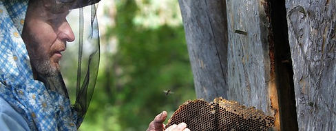 Beekeeping in Baltic countries