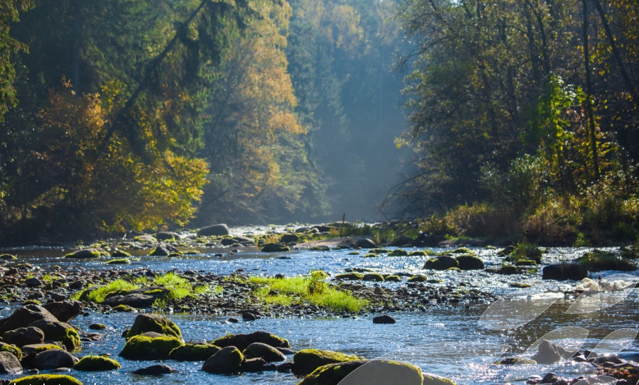 Full day excursion to Gauja National Park